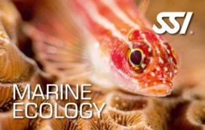Specialty Kurs - Marine Ökologie