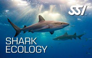 Specialty Kurs - Shark Ecology